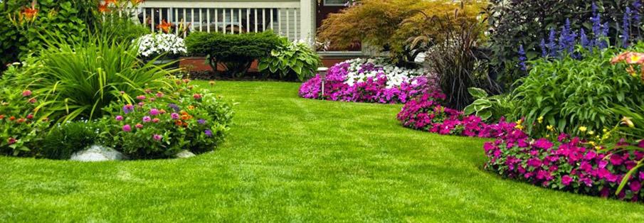 Texas Organic Fertilizer | Maestro Gro - Organic Fertilizers